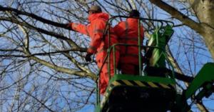 Bomen snoeien. Zelf doen of door een professional laten uitvoeren?