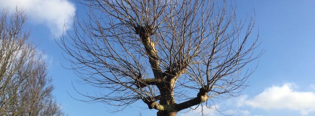 Bomen toppen