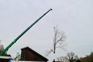 Bomen kappen met behulp van hijskraan