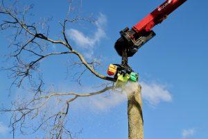 Bomen kappen met telescooparm en kettingzaag