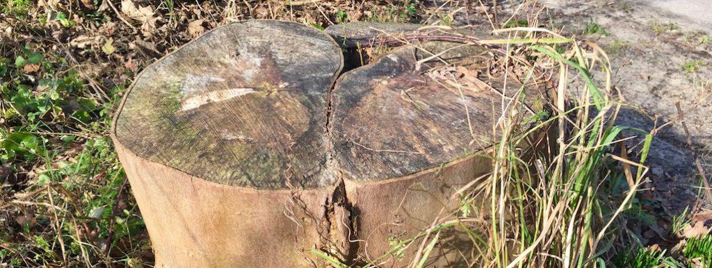Bomen kappen zonder vergunning